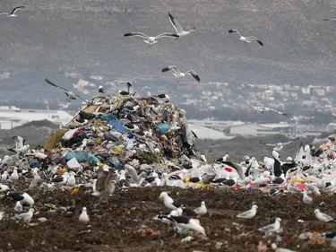Trenta multinazionali dichiarano guerra alla plastica foto 1