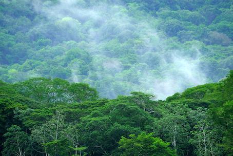 Il Carara National Park, in Costa Rica, 25 maggio 2019. Epa/Jeffrey Arguedas