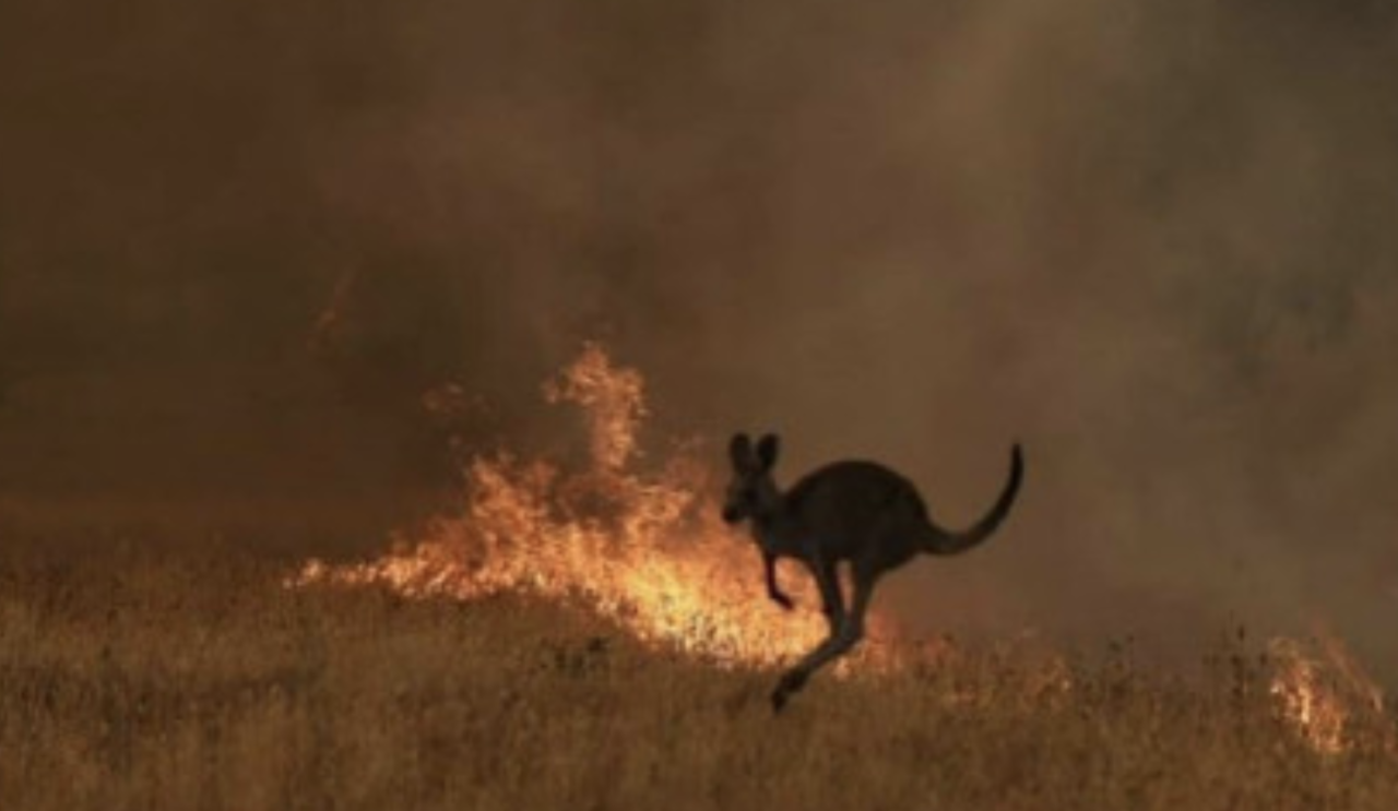 Incendi in Australia, arrestate oltre 180 persone, il 70% minorenni