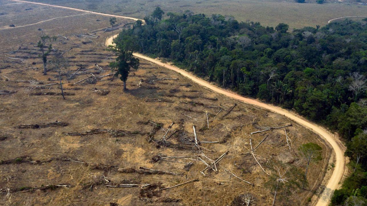 Da gennaio spariti 1.200 km quadrati di foresta Amazzonica. E Bolsonaro  taglia i fondi ai forestali - Open
