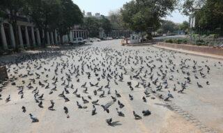 Piccioni a Connaught Place, uno degli hub finanziari di New Delhi, India, 24 marzo 2020. EPA/HARISH TYAGI