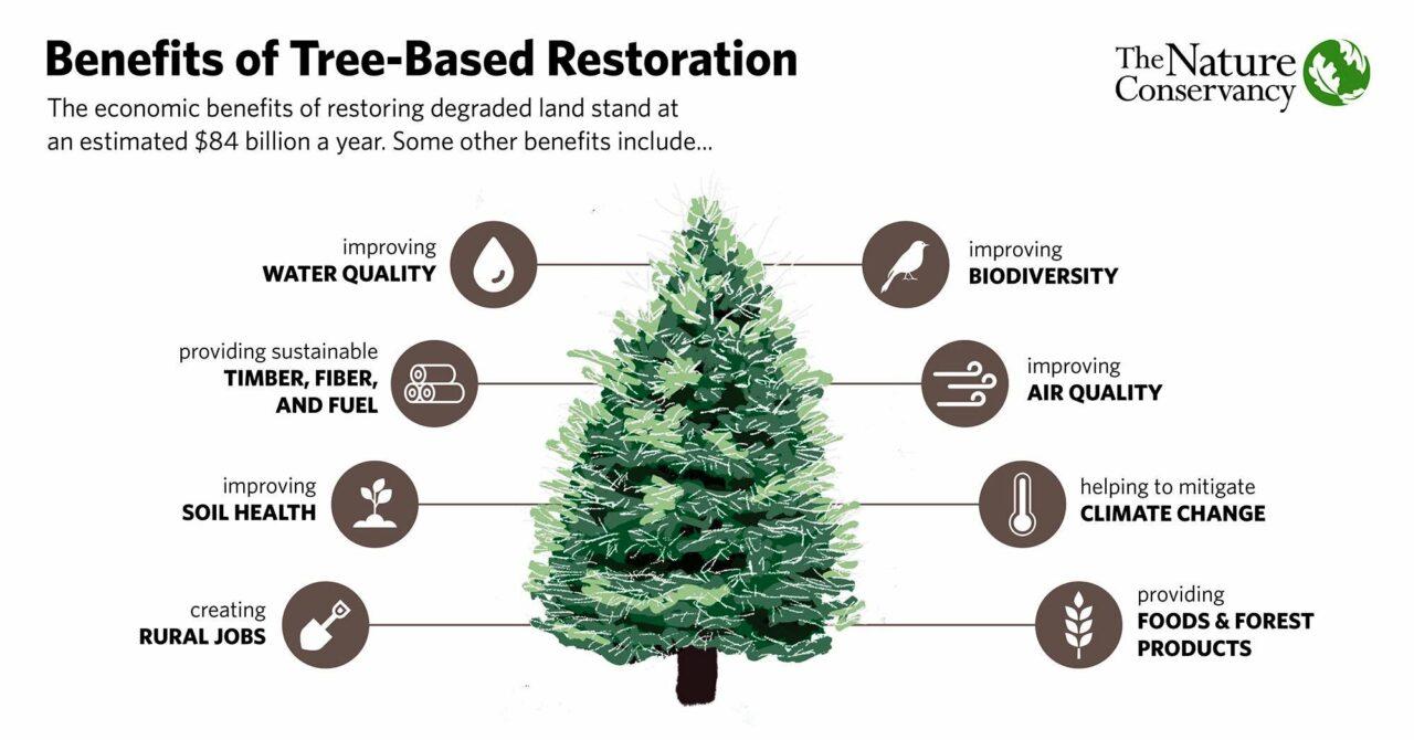 Deforestazione in calo in Europa!!!11! (Non era rimasto più niente da segare) – Il report