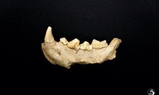 Ufficio Stampa Mic / Emanuele Antonio Minerva | Scoperti i resti di 9 uomini di Neanderthal al Circeo